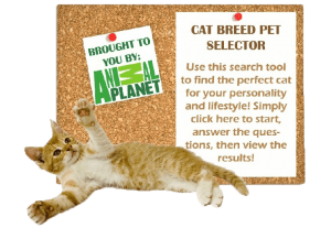 Cat-Breed-Selector-2-300x207
