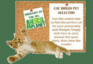 Cat-Breed-Selector-2-300x207
