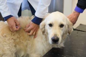 Memphis TN Pet Vaccinations